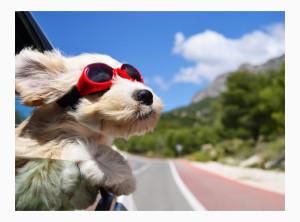 Автогамак для собак на дачу в дорогу