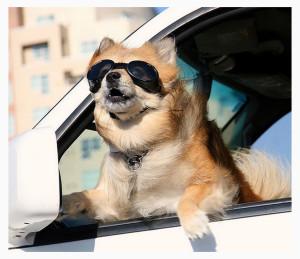 Автогамак для собак на дачу и в поездку
