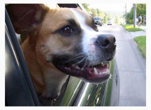 Автогамак для собак на дачу
