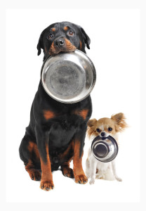 Еда и вода для собаки во время перевозки в машине