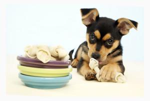 Еда, лакмства, лекарства, питье собаки при перевозки