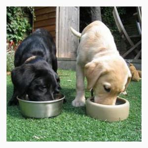 Еда и питье собаки при перевозки в машине