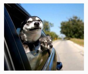 Методы психологической поддержи собаки при перевозке