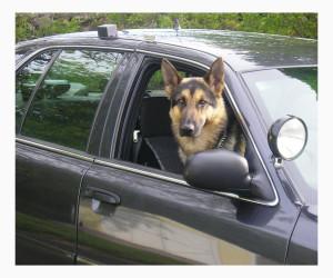 Как успокоить собаку в поездке в машине